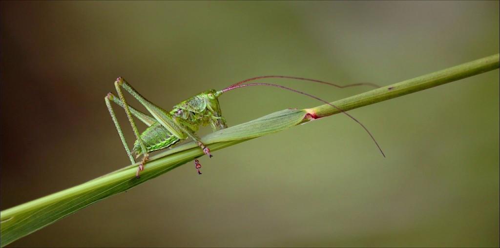 grasshopper-395338_1280